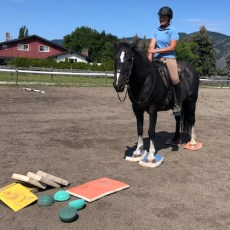 SURE FOOT Equine Stability System