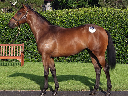 Hinchinbrook filly for Boom
