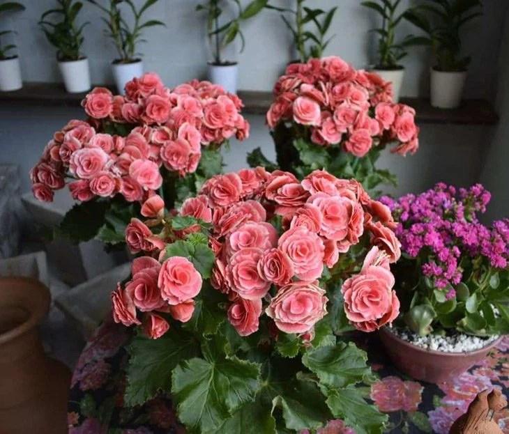 flores que você pode ter em casa