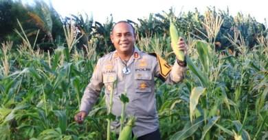 Kapolres-Maluku-Tenggara-panen-hasil-kebun-jagung-ketahanan-pangan.