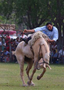 gaucho festival argentina