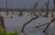 Bigi Pan Suriname
