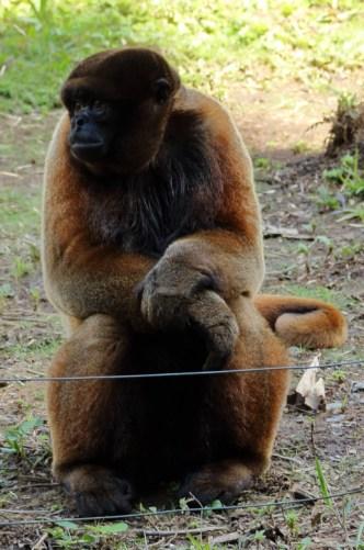 Yanacocha Animal Refuge