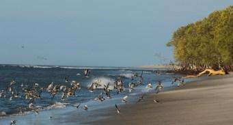 Chame Beach