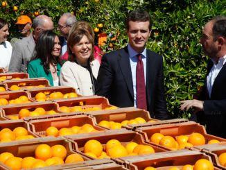 Bonig ha visitado unos campos de naranjos en La Pobla de Vallbona junto al presidente del Partido Popular, Pablo Casado.