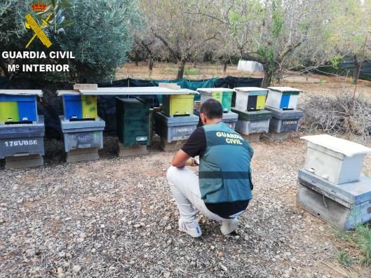 """El Equipo Roca de la Guardia Civil de Sueca junto con la Guardia Civil de Llombay en el marco de la operación """"BEEKEEPER"""" ha procedido a la detención de un varón de 61 años por su implicación en supuestos delitos de hurto en colmenas de abejas."""