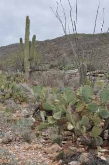 Saguaro National Park EAST picture