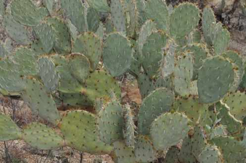 cactus at Saguaro National Park EAST