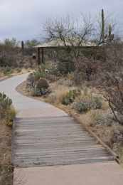 picnic area at Saguaro National Park EAST