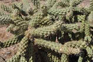 Case Park cactus