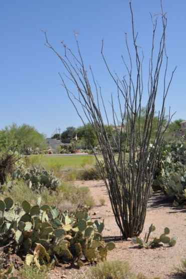 Case Park is a nice mix of desert landscape and grassy playspaces