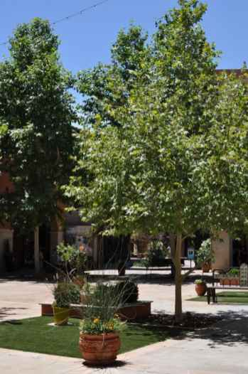 La Encantada courtyard