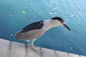 bird at Gene C Reid Park