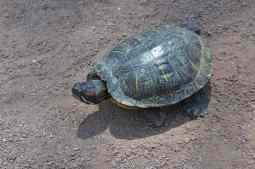 turtle at Gene C Reid Park