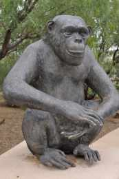 bronze monkey on the Safari Trail