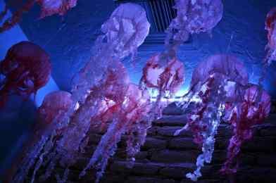 crepe paper jellyfish at Arizona-Sonora Desert Museum