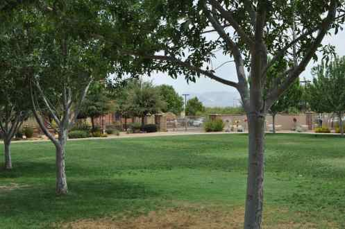 green grass at Rancho Sahuarita