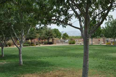 green grass at Rancho Sahuarita
