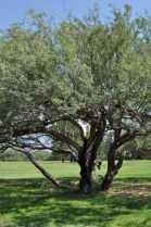 tree at Abraham Lincoln Regional Park