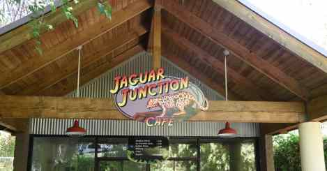 Jaguar Junction Cafe Reid Park Zoo