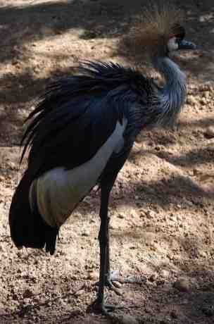scary bird Reid Park Zoo