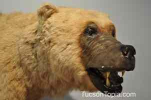 bear at International Wildlife Museum