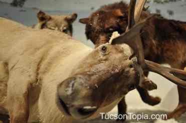 moose at International Wildlife Museum