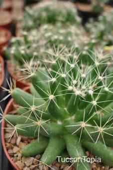 cacti at Tohono Chul Park