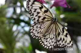 Butterfly Magic is open daily between Oct 1 and April 30