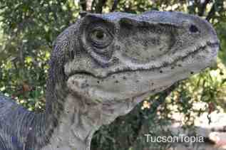 dinosaur at Tucson Botanical Gardens