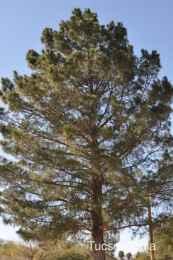 beautiful tree at La Madera Park
