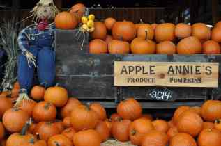 Apple Annie's Produce Pumpkins