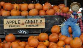 Apple Annie's Produce and Pumpkins in Willcox