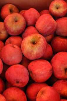 apples at Apple Annie's
