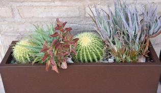 desert planter at Ritz-Carlton Dove Mountain