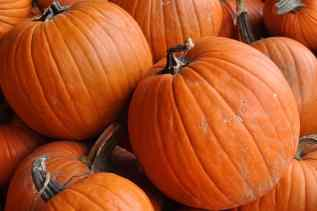 pumpkins at Apple Annie's