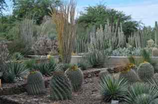 cactus at Desert Botanical Garden