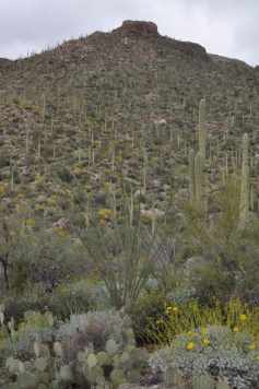 Pima Canyon in late February