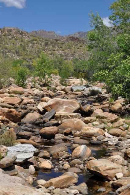rocks and water at Sabino Canyon