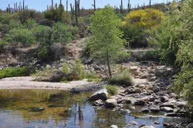 water in Sabino Canyon