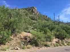 cactus at Sabino Canyon
