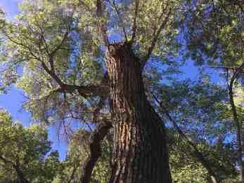 tree at Sabino Canyon
