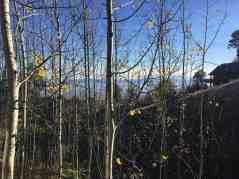 beginning of autumn at mount lemmon