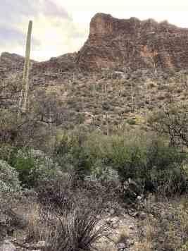 cactus and rocks on Ventana Canyon Trail