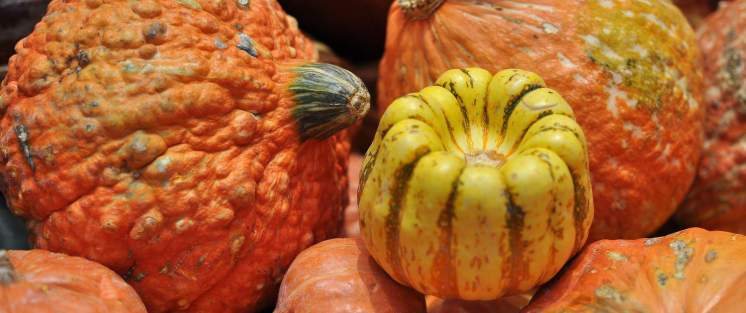 pumpkins-gourds-ajs-fine-foods