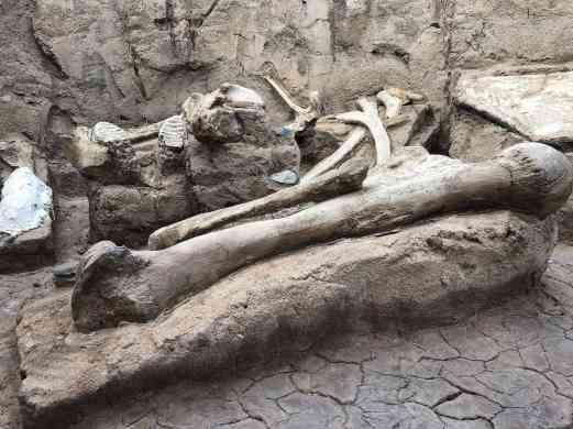 dinosaur fossils bones arizona sonora desert museum