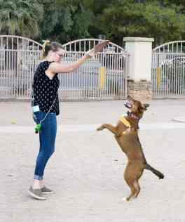 Dog Park Gene C Reid