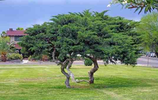 trees Catalina Park
