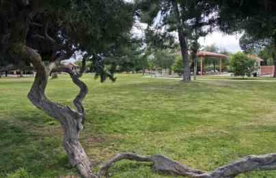 trees grass Catalina Park Tucson
