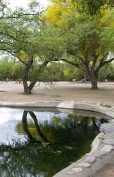 trees reflection Fort Lowell Park